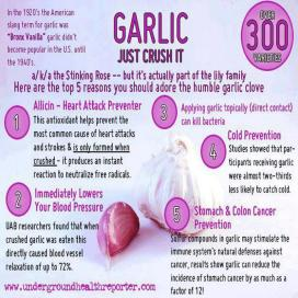 5-health-benefits-of-garlic