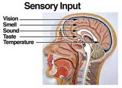 syn_sensory-input